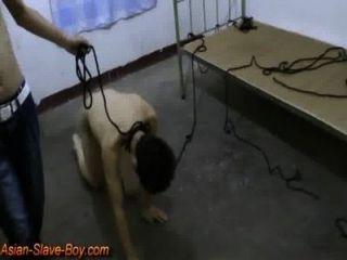 चिकनी एशियाई दास कुत्ता प्रशिक्षण