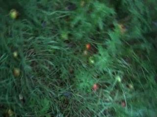 Bellas उसकी alphas में सड़ा हुआ सेब रौंदते