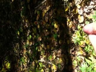 जंगल में 10 सह रस्सियों
