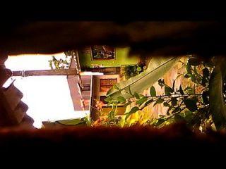 कैमरा ओकल्टा कैप्चा एल कल्को डे अबा मजेर क्यूस नविन ...