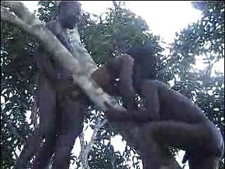 पेड़ भाग 2 पर वास्तविक अफ्रीकी शौकिया बकवास