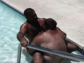 पूल में भालू