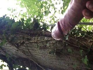 जंगल में ब्रिटेन बड़ा मुर्गा सह