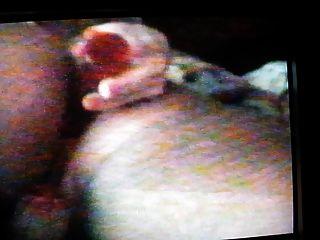 पुराने घर वीडियो: बिल्ली और गधा