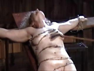 कांटेदार तार के साथ बंधे, मुलायम तैसा और बिल्ली मांस पेराई