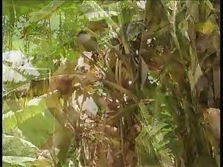 टीएस जंगल द्वीप lovin
