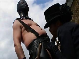 ब्रिटिश Savanah गोल्ड एक गांठदार दृश्य में गड़बड़ हो जाता है
