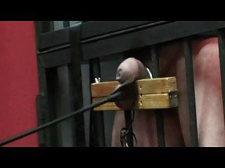 गंभीर मुर्गा और गेंद यातना