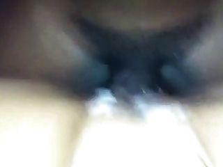 बिल्ली पर सह