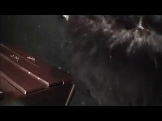 शौकिया सीडी चूसने और कच्चे कमबख्त काला मुर्गा