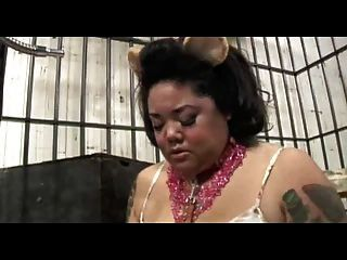 कैद वसा gerbil महिला
