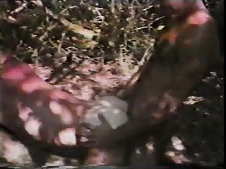 जंगल में सेक्स