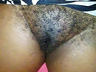 बालों जमैका गुलाबी बिल्ली 2