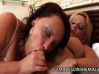 एमेरा हिर्कमेन महिला बिल्ली और एक गधा द्वारा बकवास एक किन्नर